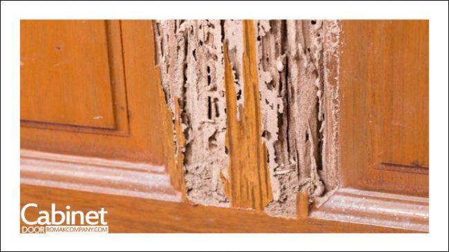 موریانه و کابینت چوبی