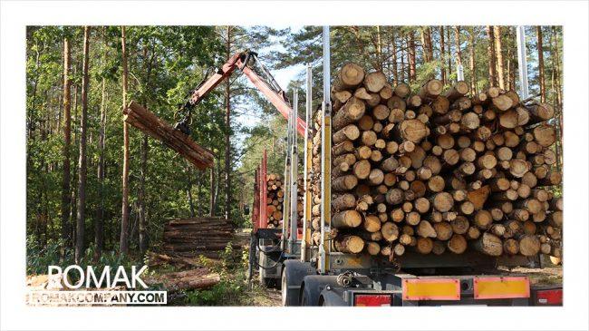تولید چوب